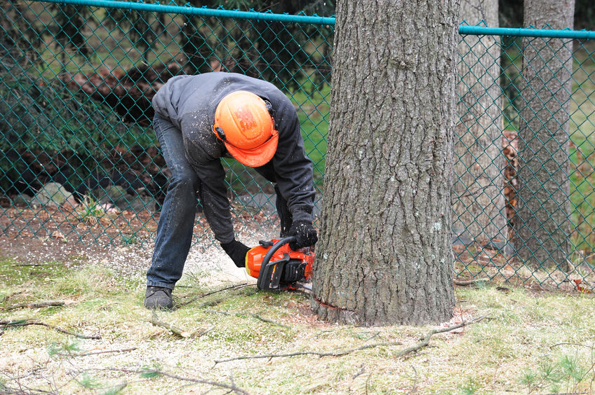 tree expert cutting a tree