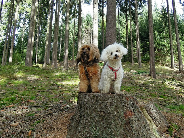 2 cute dogs on a stump
